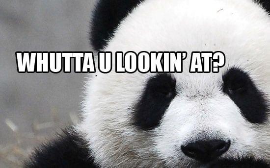 panda hates ecommerce
