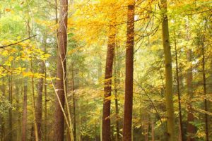 Forest light on trees purpose creativity